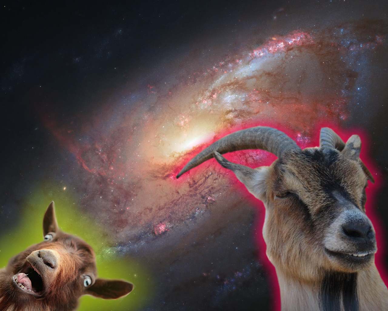 A picture of a galaxy with 2 goats seeming to float in space.  One has a smirky grin and a redish purple aura and the other looks terrified and has a yellowish green aura